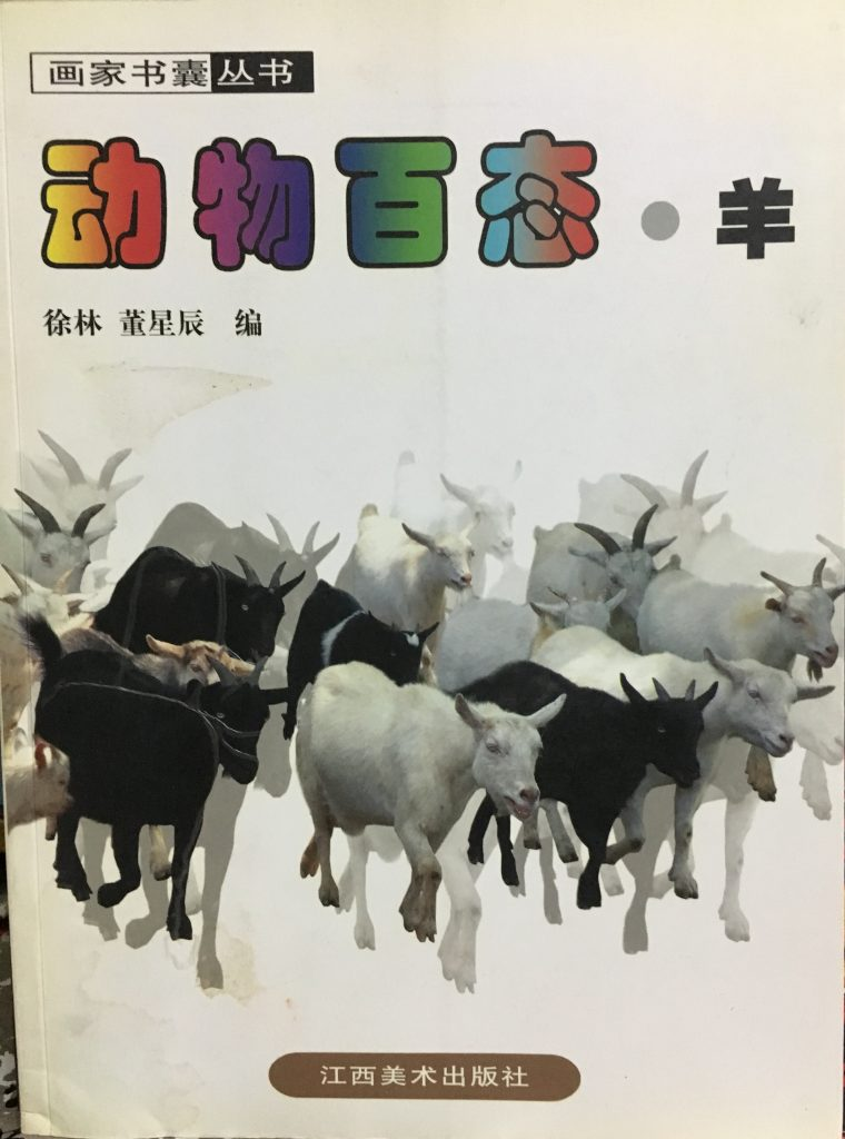 動物百態-羊